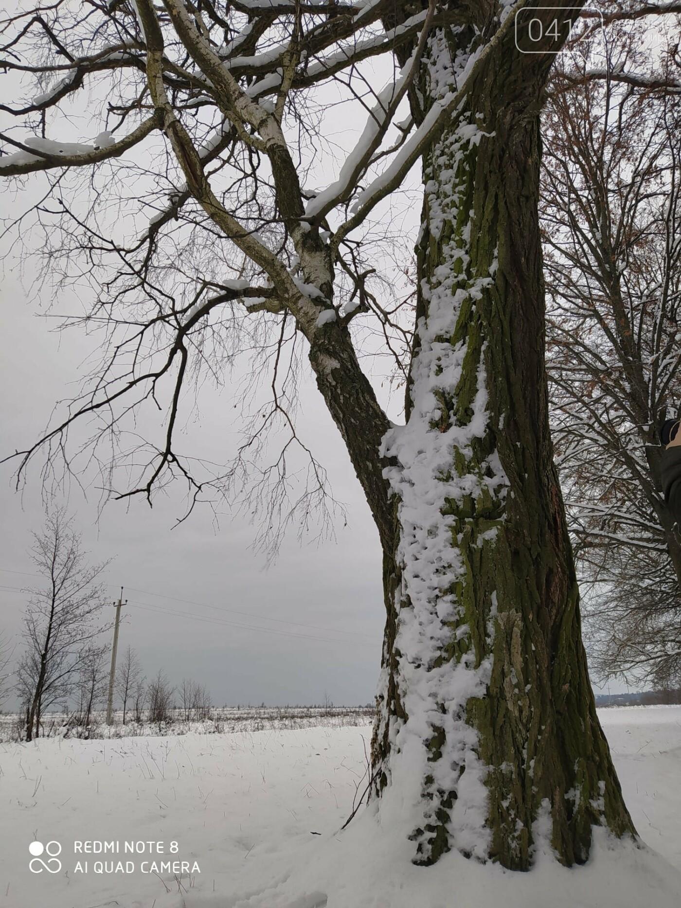 «Незвичайні дерева навколо нас»: на Житомирщині лісівники оголошують челендж, фото-2