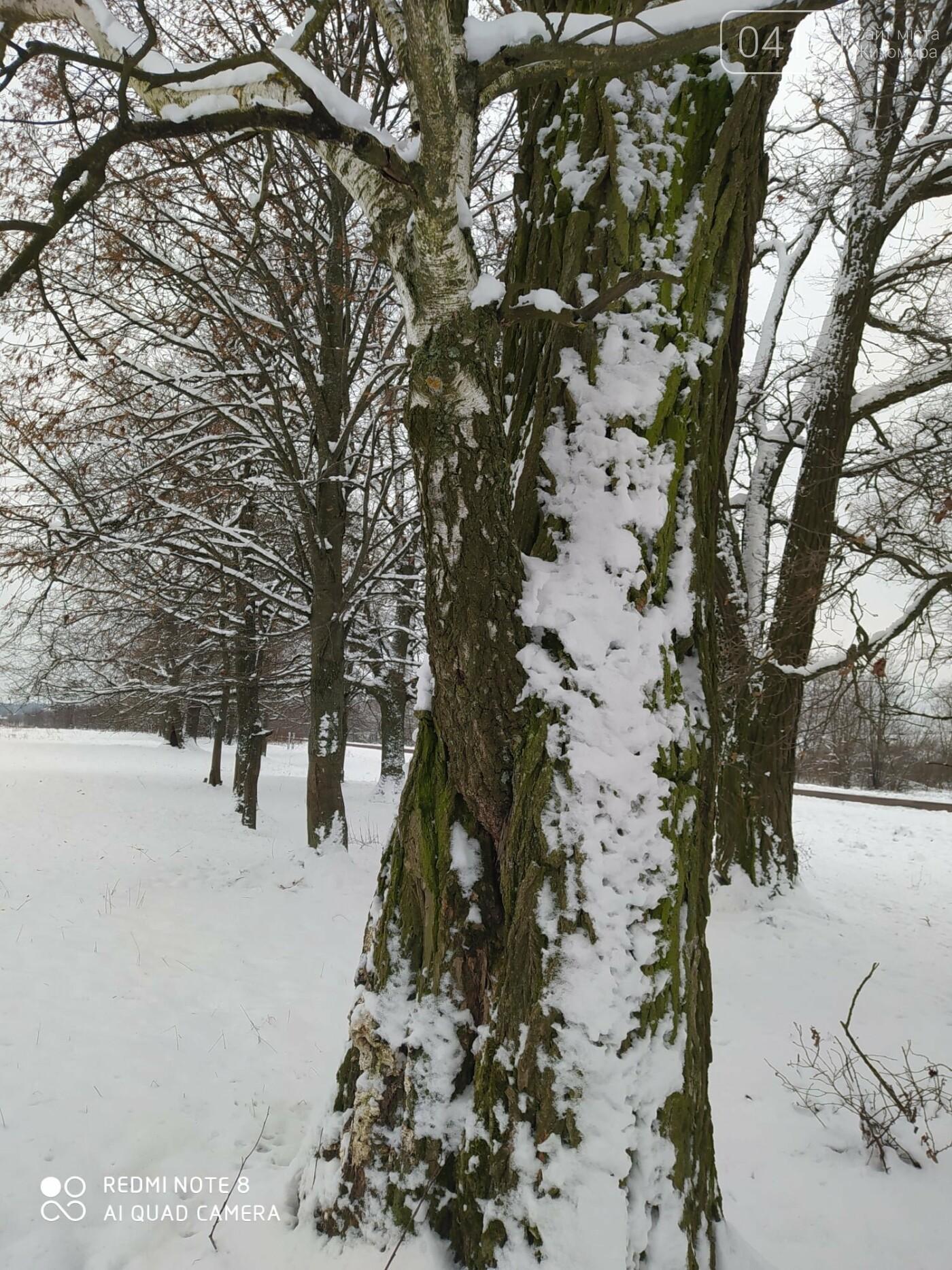 «Незвичайні дерева навколо нас»: на Житомирщині лісівники оголошують челендж, фото-3