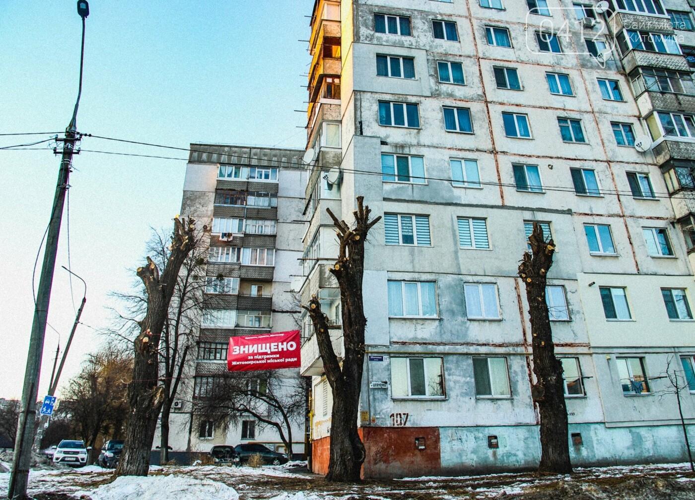 У Житомирі забили на сполох через те, як в місті обрізають дерева. ФОТО, фото-2