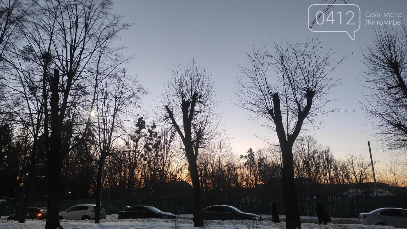 У Житомирі забили на сполох через те, як в місті обрізають дерева. ФОТО, фото-3