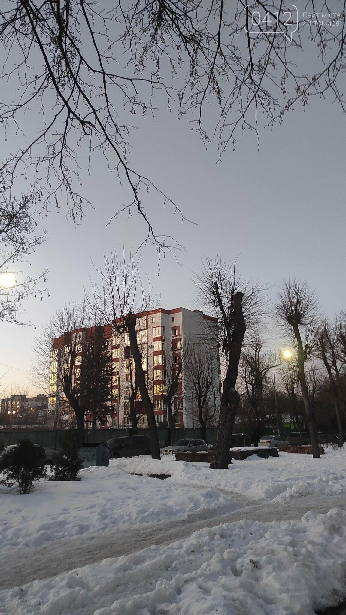 У Житомирі забили на сполох через те, як в місті обрізають дерева. ФОТО, фото-4