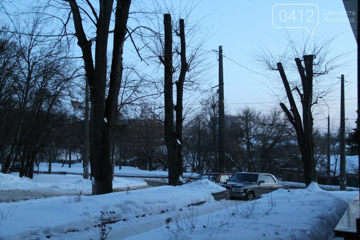 У Житомирі забили на сполох через те, як в місті обрізають дерева. ФОТО, фото-5
