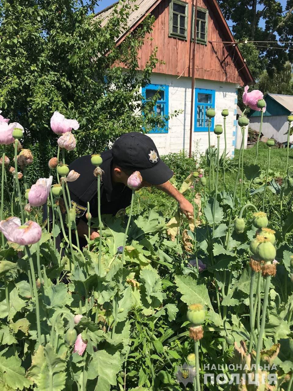 На Житомирщині правоохоронці продовжують вилучати наркотичні рослини, фото-2