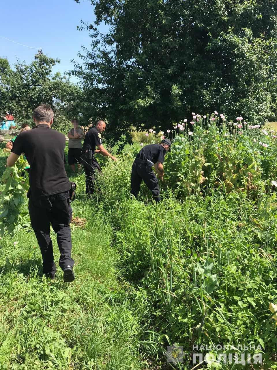 На Житомирщині правоохоронці продовжують вилучати наркотичні рослини, фото-4