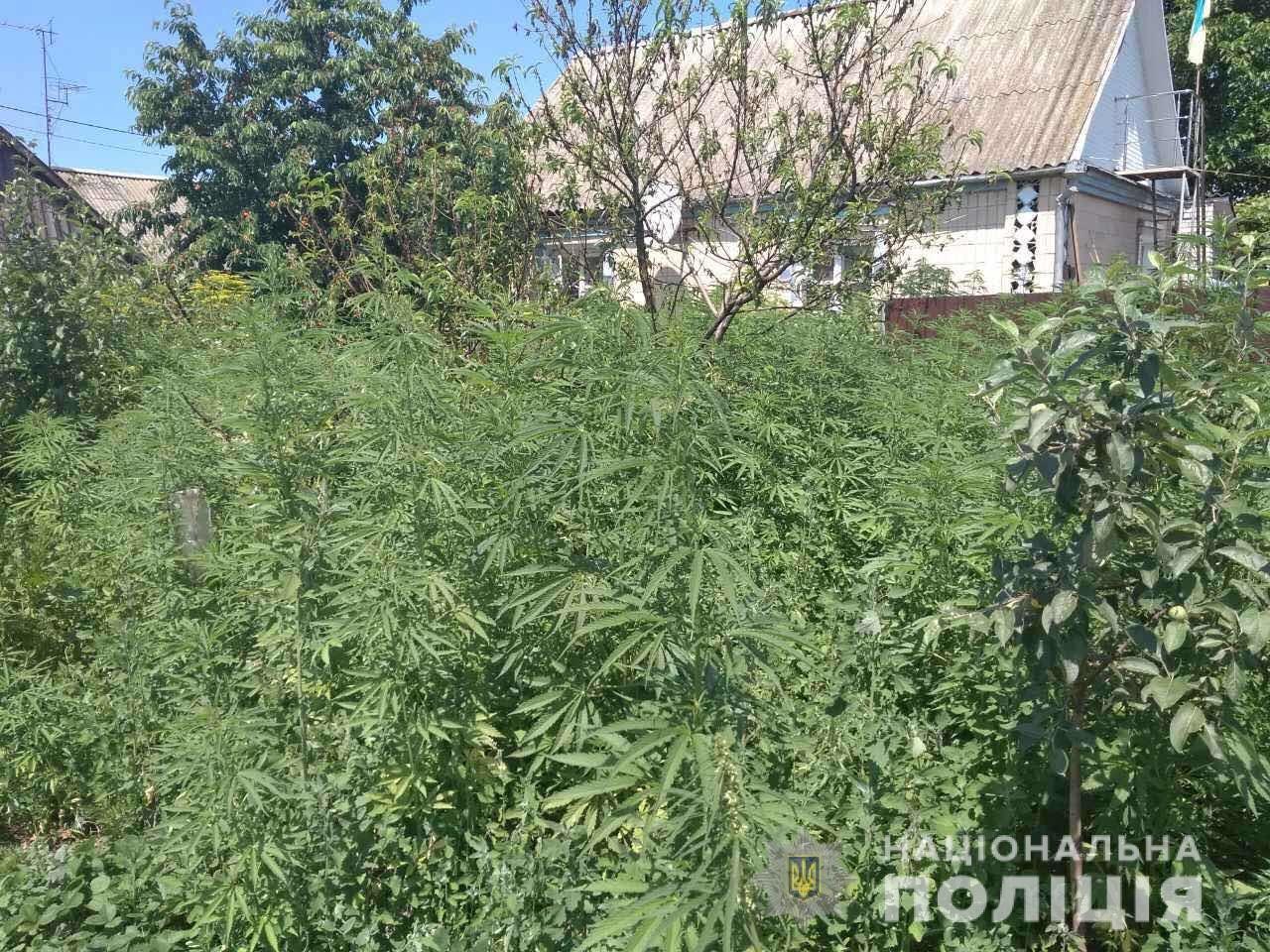 Поліція Житомирщини активно вилучає у населення мак та коноплю, фото-1