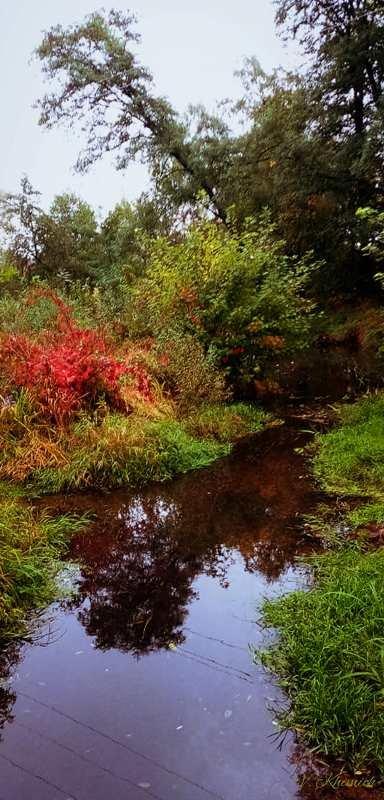 На берегах річки Лісової: Живописні осінні краєвиди в Житомирі. ФОТО, фото-5