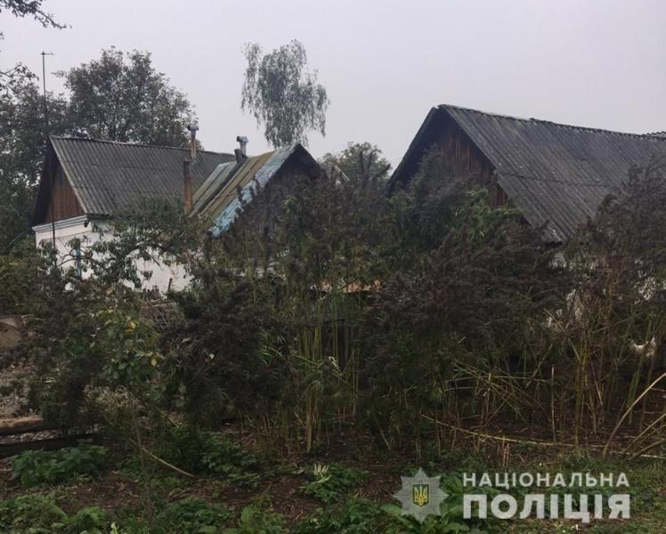 На Житомирщині поліцейські виявили у приватному обійсті зарості конопель та кілька кг наркотичного засобу, фото-1