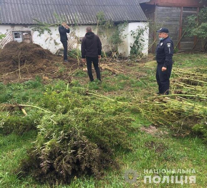 На Житомирщині поліцейські виявили у приватному обійсті зарості конопель та кілька кг наркотичного засобу, фото-2