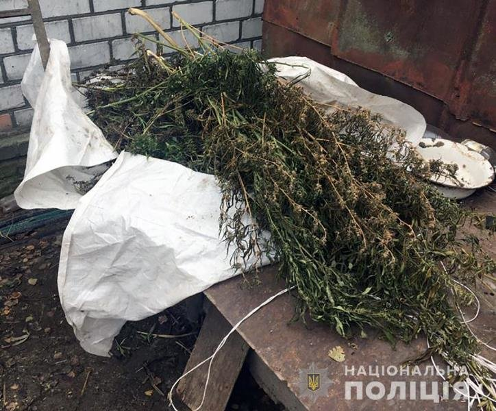 На Житомирщині поліцейські виявили у приватному обійсті зарості конопель та кілька кг наркотичного засобу, фото-3