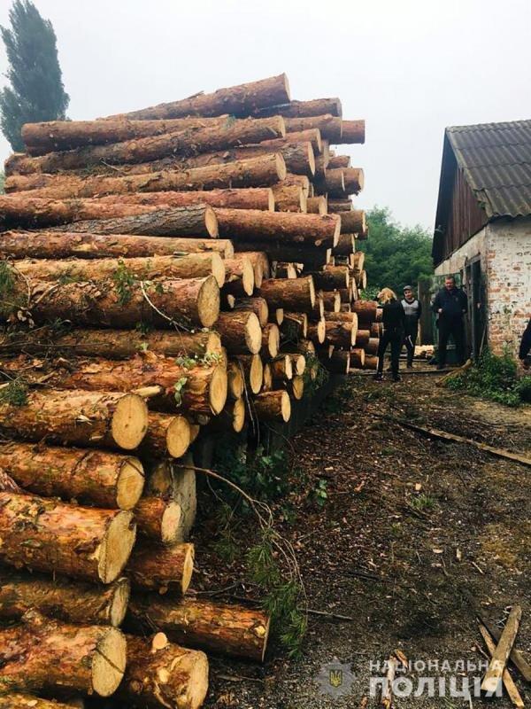 Поліцейські Житомирщини розслідують нові факти незаконних порубок лісу, фото-1