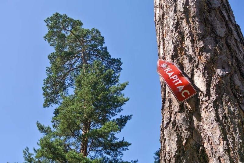Колоритні околиці Житомира. ФОТО, фото-8