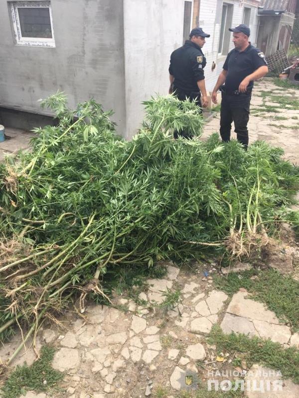Поліцейські Житомирщини вилучили в полісян майже 18 тисяч нарковмісних рослин, фото-5