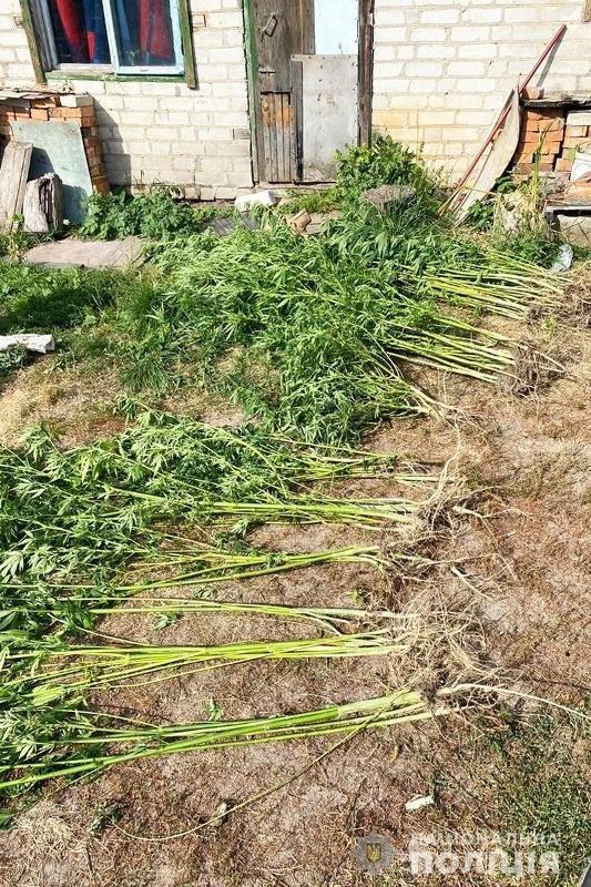 Поліцейські Житомирщини вилучили в полісян майже 18 тисяч нарковмісних рослин, фото-2