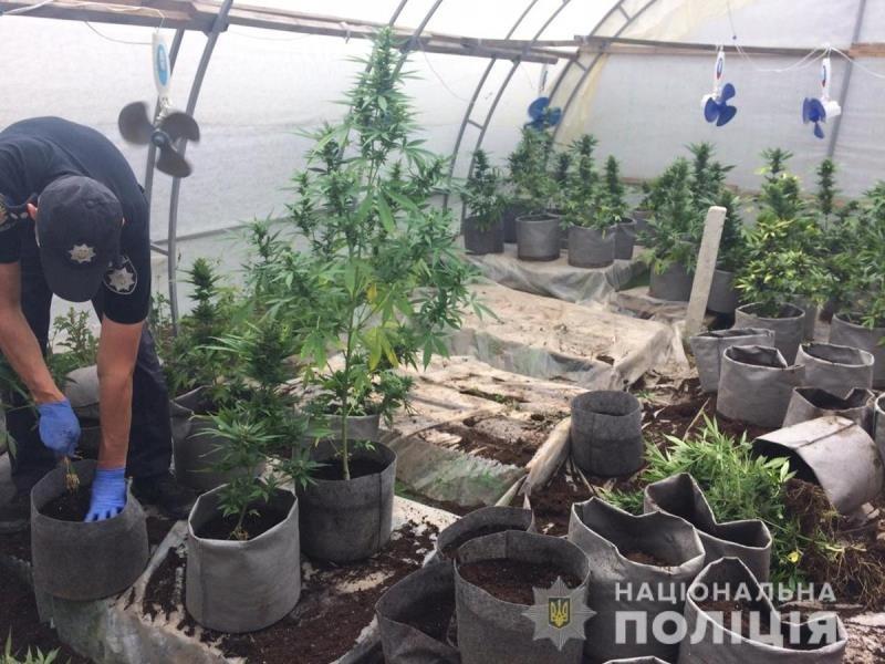 Поліцейські Житомирщини вилучили в полісян майже 18 тисяч нарковмісних рослин, фото-7
