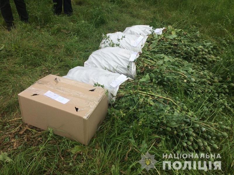 Поліцейські Житомирщини вилучили в полісян майже 18 тисяч нарковмісних рослин, фото-10