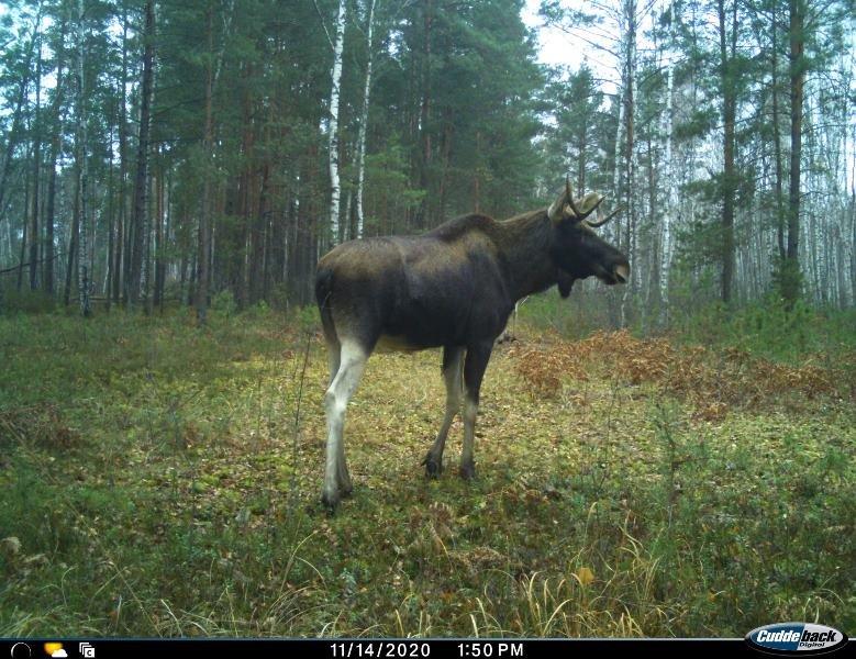 Природа без кордонів: вражаючі світлини тварин Поліського природного заповідника, фото-4