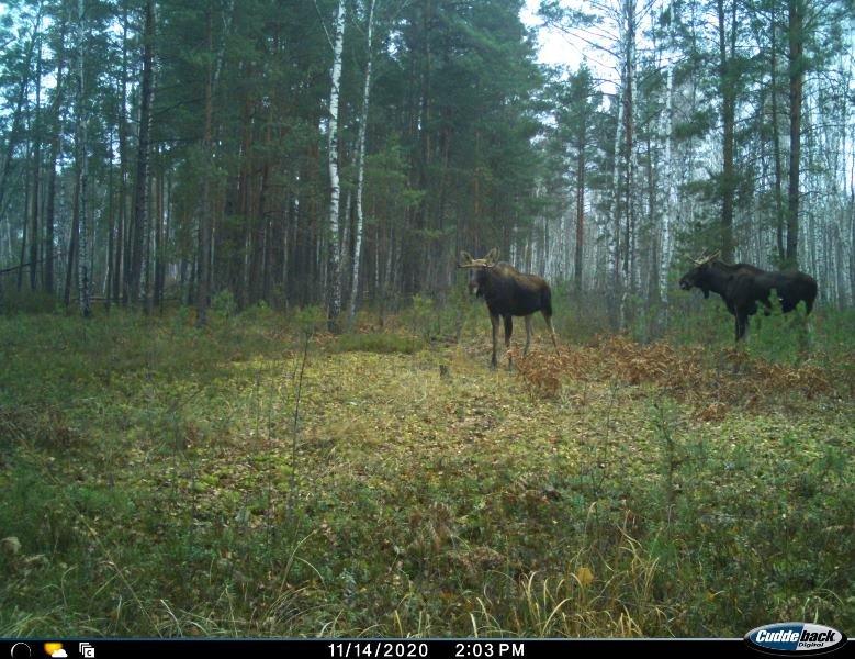 Природа без кордонів: вражаючі світлини тварин Поліського природного заповідника, фото-1