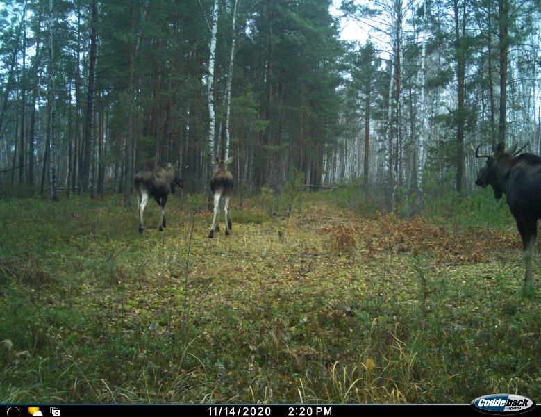 Природа без кордонів: вражаючі світлини тварин Поліського природного заповідника, фото-2