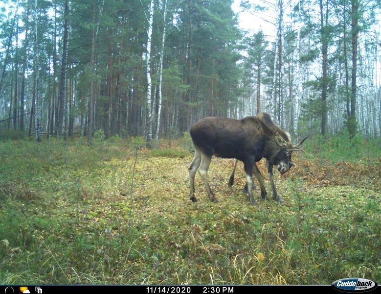 Природа без кордонів: вражаючі світлини тварин Поліського природного заповідника, фото-3