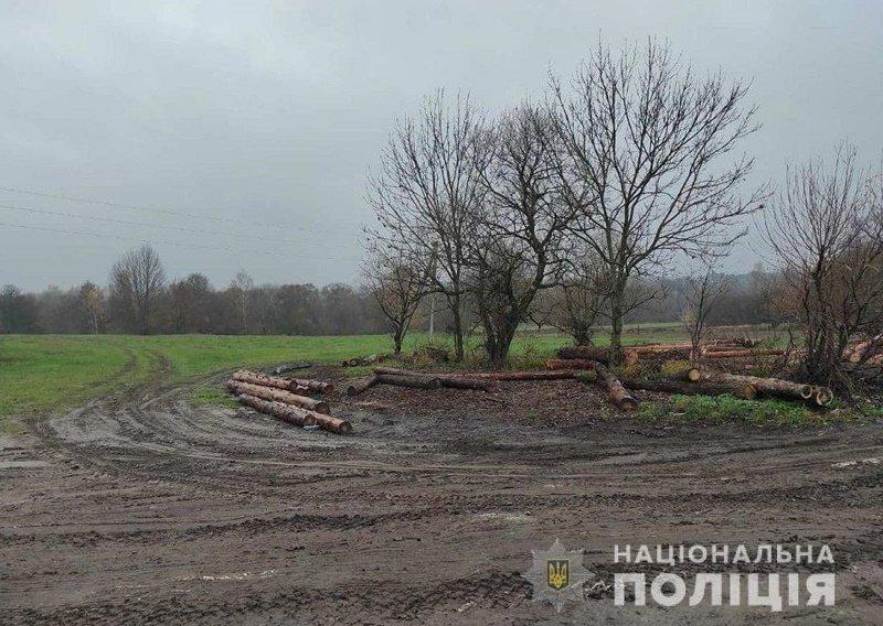 За добу в трьох районах Житомирщини поліцейські зафіксували незаконні оборудки з лісом, фото-2