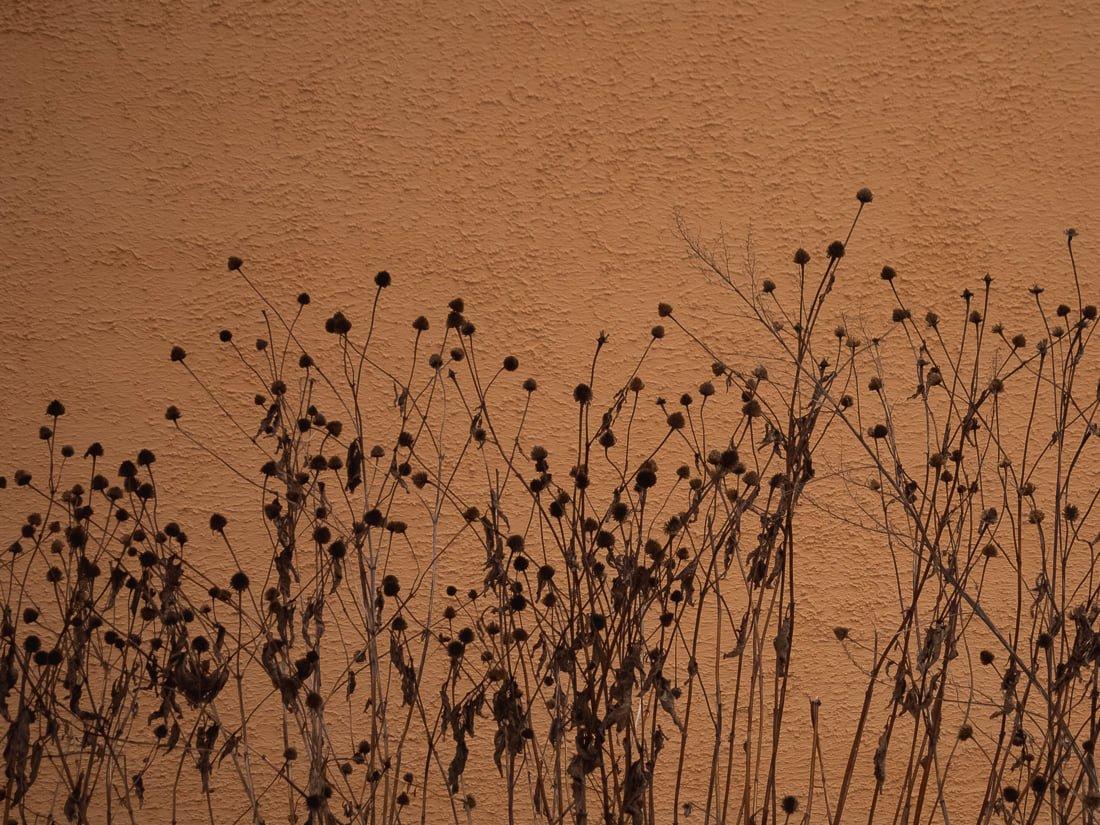 Миттєвості зими: прогулянка атмосферним Житомиром. ФОТО, фото-13