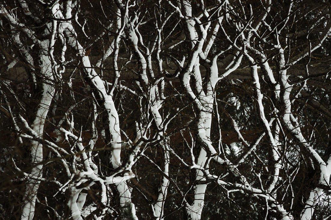 Миттєвості зими: прогулянка атмосферним Житомиром. ФОТО, фото-3