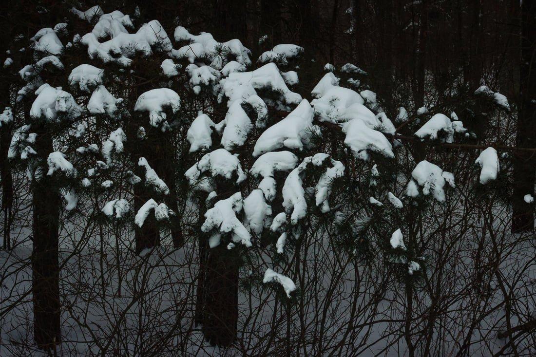 Миттєвості зими: прогулянка атмосферним Житомиром. ФОТО, фото-7