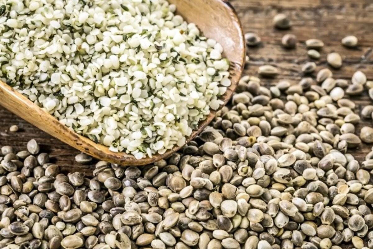 Лечебные свойства конопляного семя марихуана самцы